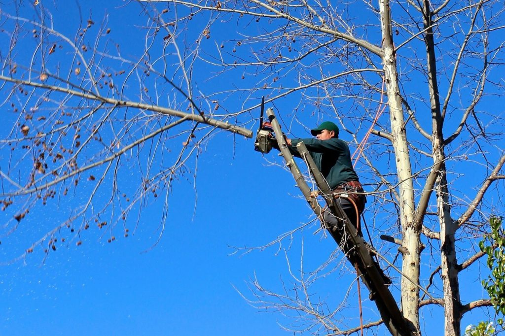 Contact Us-Miami Lakes FL Tree Trimming and Stump Grinding Services-We Offer Tree Trimming Services, Tree Removal, Tree Pruning, Tree Cutting, Residential and Commercial Tree Trimming Services, Storm Damage, Emergency Tree Removal, Land Clearing, Tree Companies, Tree Care Service, Stump Grinding, and we're the Best Tree Trimming Company Near You Guaranteed!