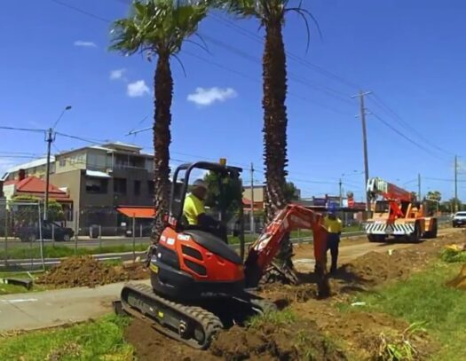 Palm Tree Removal-Miami Lakes FL Tree Trimming and Stump Grinding Services-We Offer Tree Trimming Services, Tree Removal, Tree Pruning, Tree Cutting, Residential and Commercial Tree Trimming Services, Storm Damage, Emergency Tree Removal, Land Clearing, Tree Companies, Tree Care Service, Stump Grinding, and we're the Best Tree Trimming Company Near You Guaranteed!
