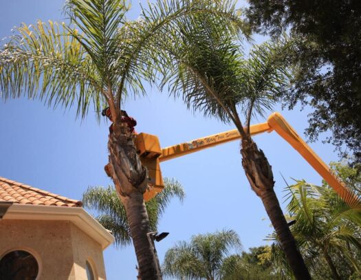 Palm Tree Trimming-Miami Lakes FL Tree Trimming and Stump Grinding Services-We Offer Tree Trimming Services, Tree Removal, Tree Pruning, Tree Cutting, Residential and Commercial Tree Trimming Services, Storm Damage, Emergency Tree Removal, Land Clearing, Tree Companies, Tree Care Service, Stump Grinding, and we're the Best Tree Trimming Company Near You Guaranteed!