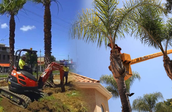 Palm tree trimming & palm tree removal-Miami Lakes FL Tree Trimming and Stump Grinding Services-We Offer Tree Trimming Services, Tree Removal, Tree Pruning, Tree Cutting, Residential and Commercial Tree Trimming Services, Storm Damage, Emergency Tree Removal, Land Clearing, Tree Companies, Tree Care Service, Stump Grinding, and we're the Best Tree Trimming Company Near You Guaranteed!