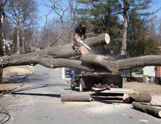 Residential Tree Services-Miami Lakes FL Tree Trimming and Stump Grinding Services-We Offer Tree Trimming Services, Tree Removal, Tree Pruning, Tree Cutting, Residential and Commercial Tree Trimming Services, Storm Damage, Emergency Tree Removal, Land Clearing, Tree Companies, Tree Care Service, Stump Grinding, and we're the Best Tree Trimming Company Near You Guaranteed!