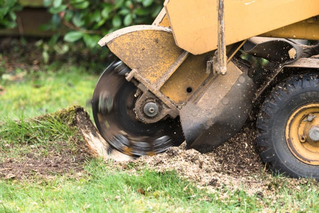 Stump Grinding-Miami Lakes FL Tree Trimming and Stump Grinding Services-We Offer Tree Trimming Services, Tree Removal, Tree Pruning, Tree Cutting, Residential and Commercial Tree Trimming Services, Storm Damage, Emergency Tree Removal, Land Clearing, Tree Companies, Tree Care Service, Stump Grinding, and we're the Best Tree Trimming Company Near You Guaranteed!
