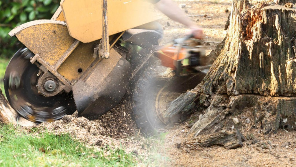 Stump grinding & removal-Miami Lakes FL Tree Trimming and Stump Grinding Services-We Offer Tree Trimming Services, Tree Removal, Tree Pruning, Tree Cutting, Residential and Commercial Tree Trimming Services, Storm Damage, Emergency Tree Removal, Land Clearing, Tree Companies, Tree Care Service, Stump Grinding, and we're the Best Tree Trimming Company Near You Guaranteed!