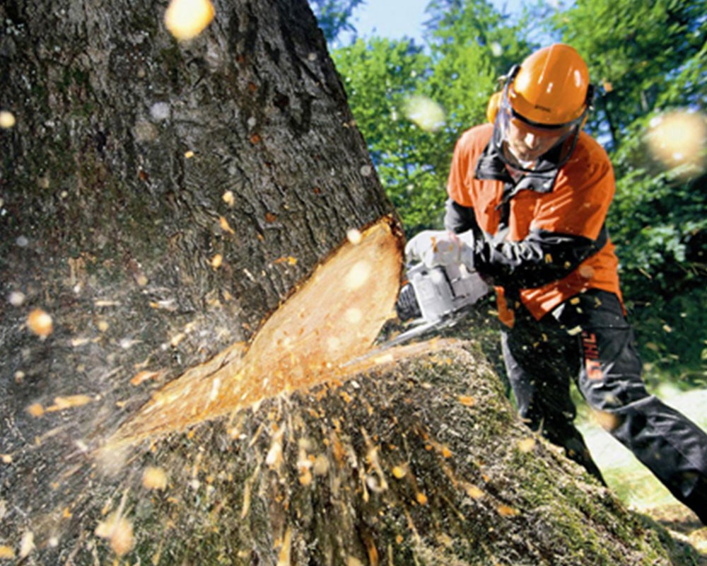 Tree Cutting-Miami Lakes FL Tree Trimming and Stump Grinding Services-We Offer Tree Trimming Services, Tree Removal, Tree Pruning, Tree Cutting, Residential and Commercial Tree Trimming Services, Storm Damage, Emergency Tree Removal, Land Clearing, Tree Companies, Tree Care Service, Stump Grinding, and we're the Best Tree Trimming Company Near You Guaranteed!