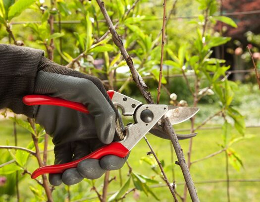 Tree Pruning-Miami Lakes FL Tree Trimming and Stump Grinding Services-We Offer Tree Trimming Services, Tree Removal, Tree Pruning, Tree Cutting, Residential and Commercial Tree Trimming Services, Storm Damage, Emergency Tree Removal, Land Clearing, Tree Companies, Tree Care Service, Stump Grinding, and we're the Best Tree Trimming Company Near You Guaranteed!
