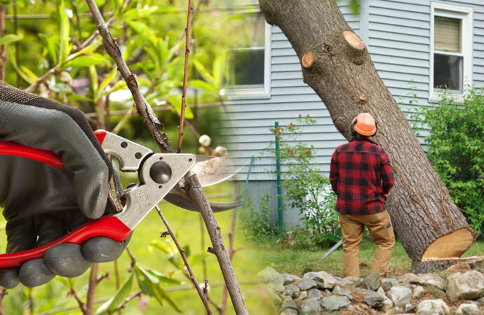 Tree pruning & tree removal-Miami Lakes FL Tree Trimming and Stump Grinding Services-We Offer Tree Trimming Services, Tree Removal, Tree Pruning, Tree Cutting, Residential and Commercial Tree Trimming Services, Storm Damage, Emergency Tree Removal, Land Clearing, Tree Companies, Tree Care Service, Stump Grinding, and we're the Best Tree Trimming Company Near You Guaranteed!